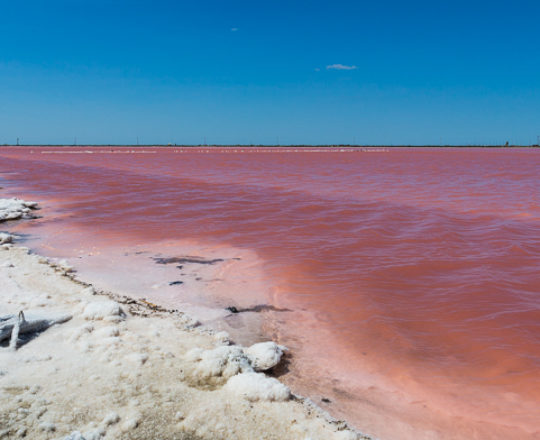 Pink Salt Flats of the Camargue